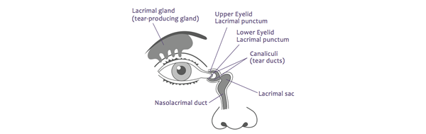 Treatment for Tear Gland by LA Surgeons